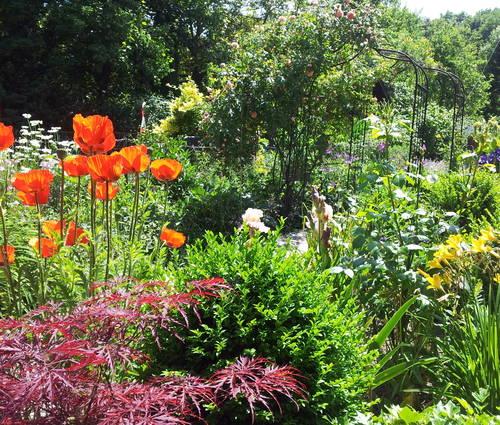 Produktbild Farbenpracht wie im Bauerngarten