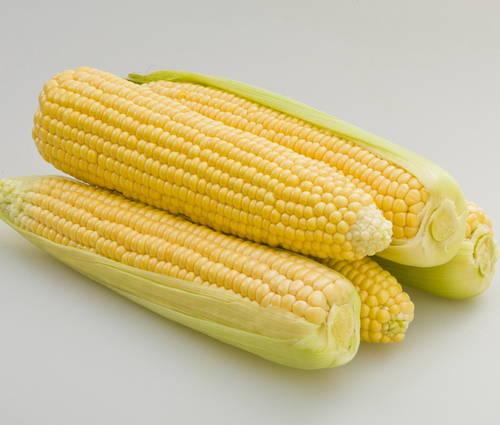 Produktbild Saatgut: Extrasüßer Zuckermais 'Damaun'